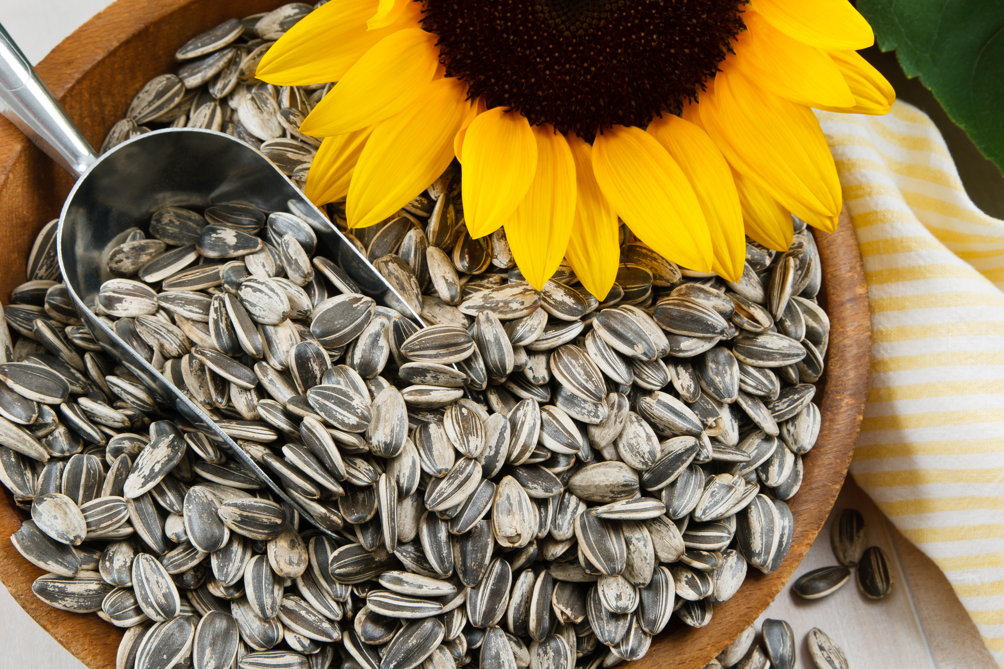 Health Benefits of Seeds in Daily Diet Plan